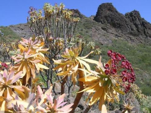 Flores camino a Masca