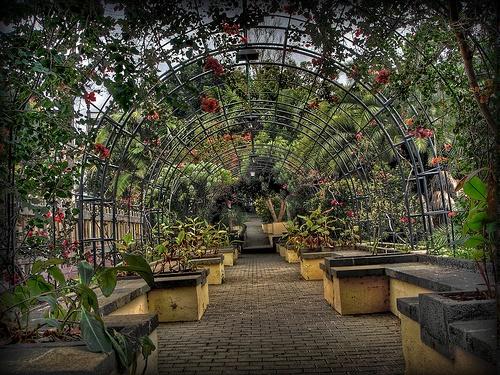 Jardin Municipal de Arucas
