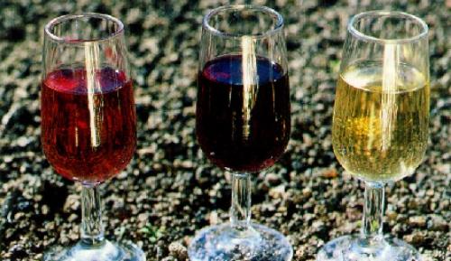 vinos de la palma
