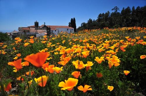Flores en Vilaflor