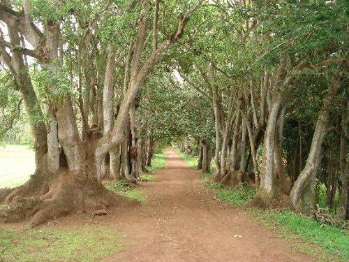 Bosque de Osorio, Teror (Gran Canaria)