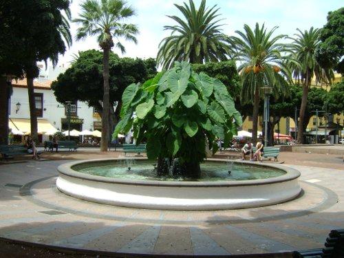 Plaza del Charco, Puerto de la Cruz