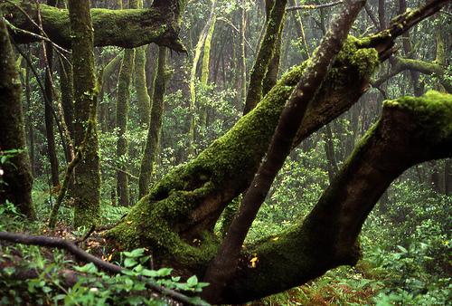 Bosque del Cedro