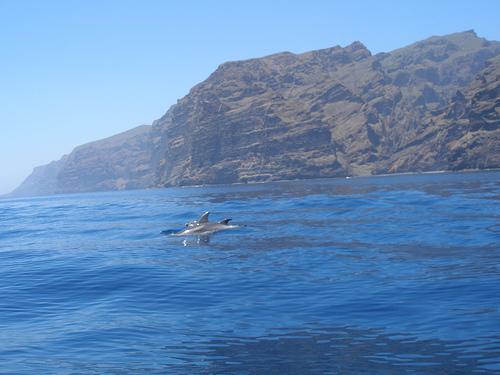 Delfines en los Gigantes