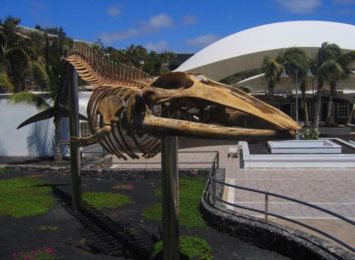 Museo de los Cetaceos de Canarias. Entrada