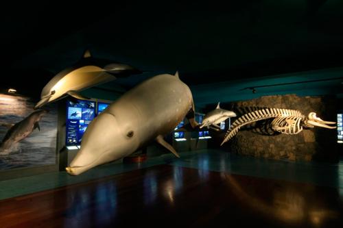 Museo de los Cetaceos de Canarias