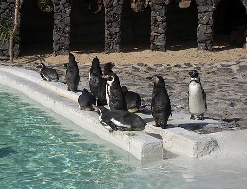 Pingüinos. Guinate Park