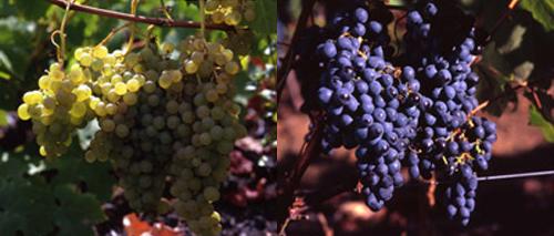 El Vino de El Hierro
